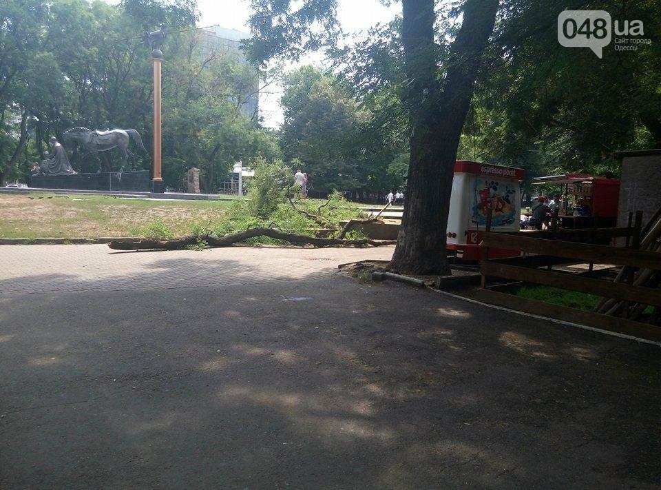 Аллею в одесском парке перегородила упавшая акация (ФОТО), фото-1