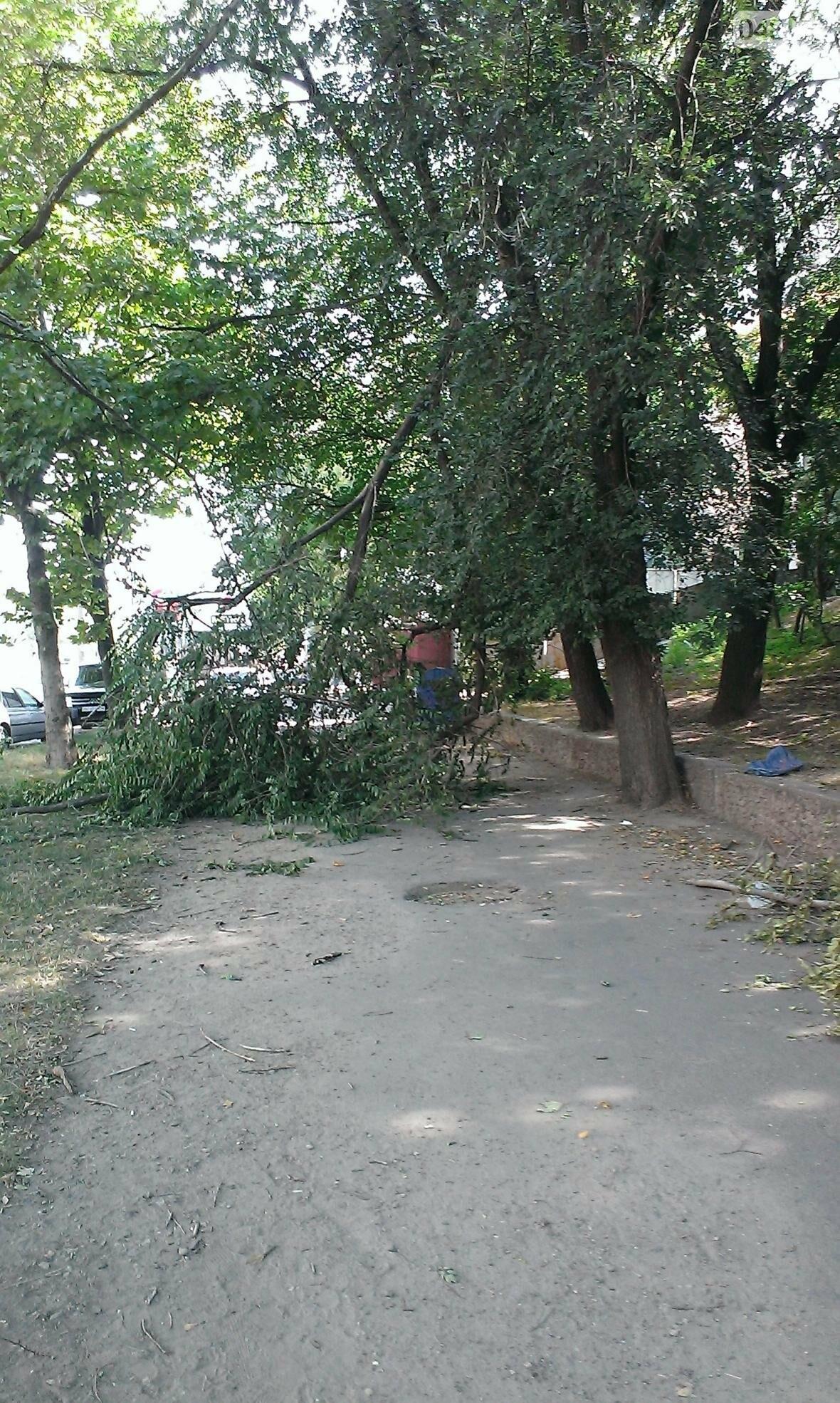 На Балковской ураган поломал дерево: ветка перегородила одесситам тротуар (ФОТО), фото-1