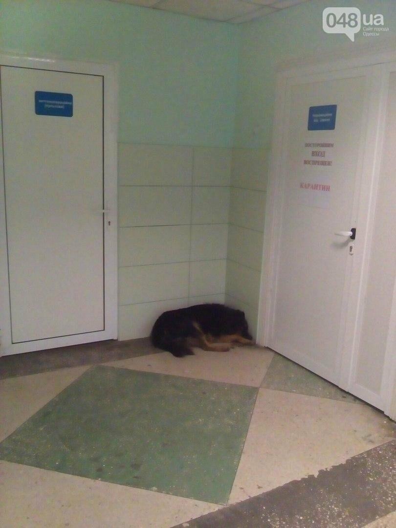 Ужасы областной больницы в Одессе: Собаки в коридоре и сплошная грязь (ФОТО), фото-1
