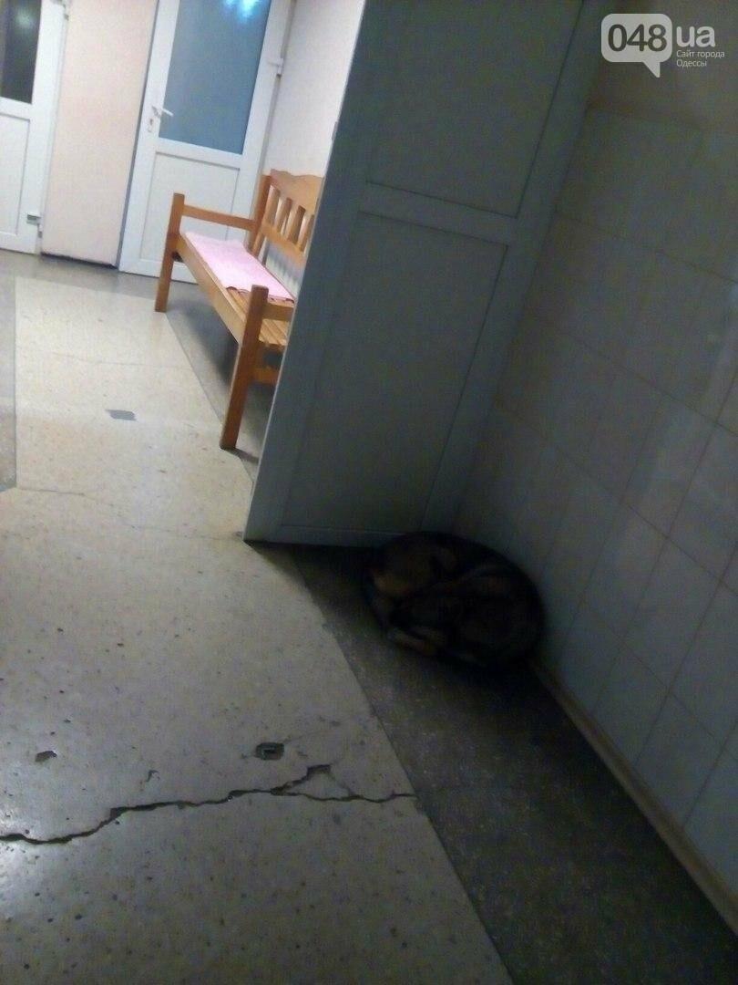 Ужасы областной больницы в Одессе: Собаки в коридоре и сплошная грязь (ФОТО), фото-2