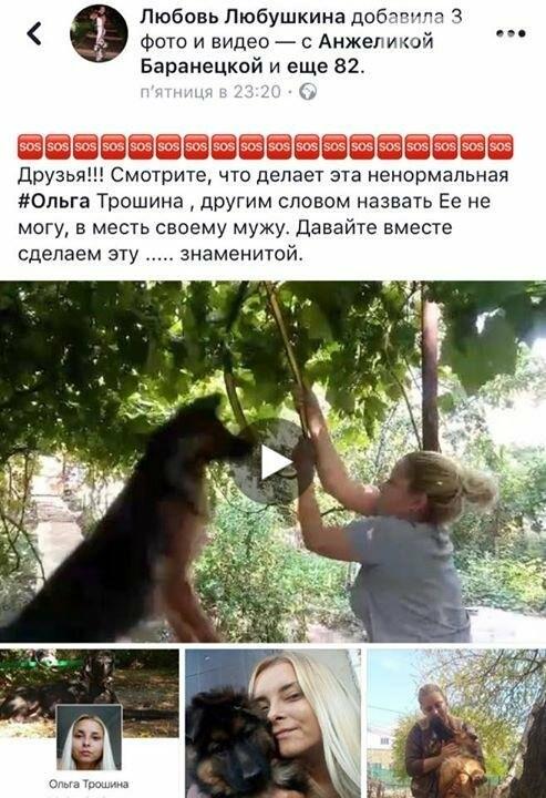Жуткое видео с повешенной собакой снимал 9-летний мальчик (ФОТО), фото-1