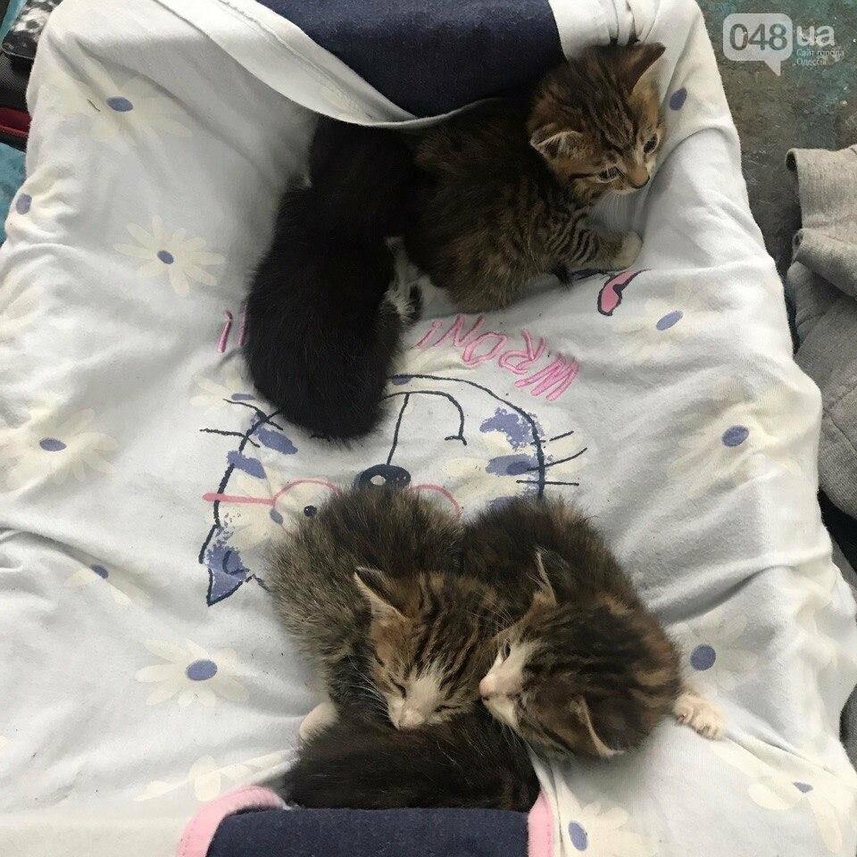 В Одессе в яму бросили пакет с живыми котятами (ФОТО), фото-2
