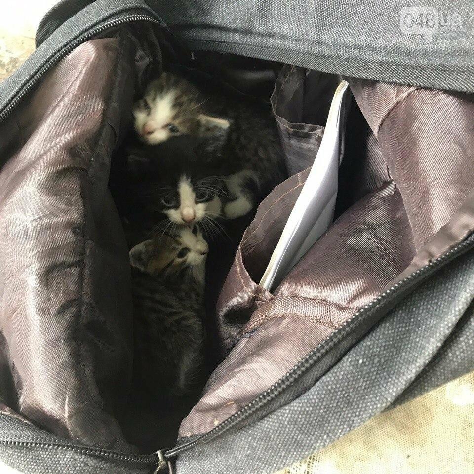 В Одессе в яму бросили пакет с живыми котятами (ФОТО), фото-1