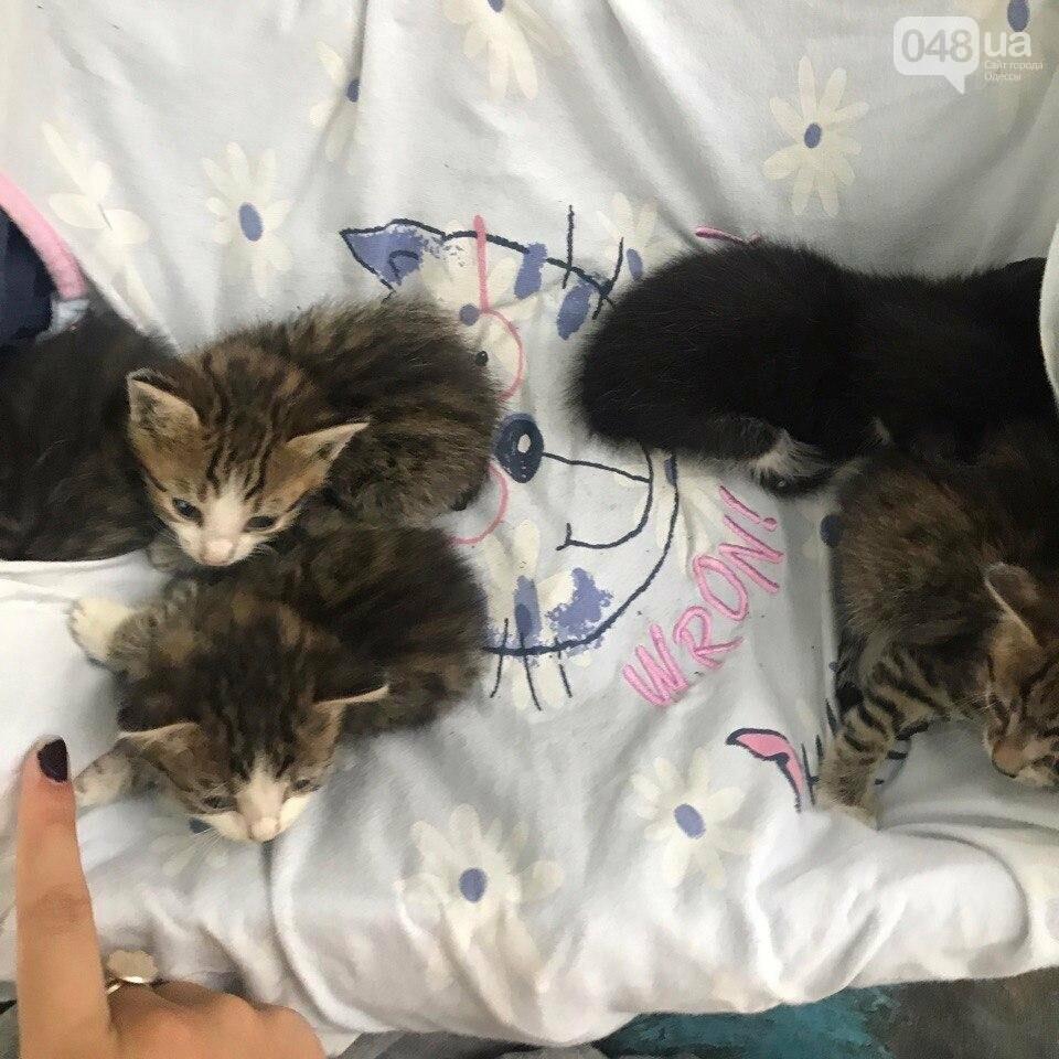 В Одессе в яму бросили пакет с живыми котятами (ФОТО), фото-3