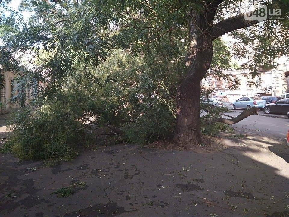 В центре Одессы ветер обломал дерево (ФОТО), фото-2