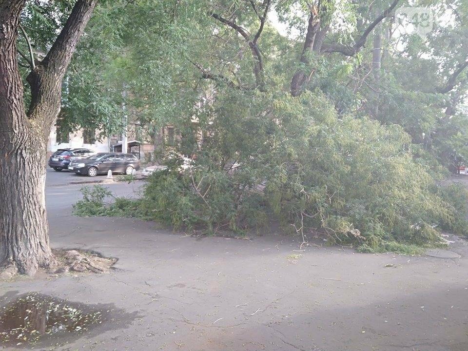 В центре Одессы ветер обломал дерево (ФОТО), фото-3