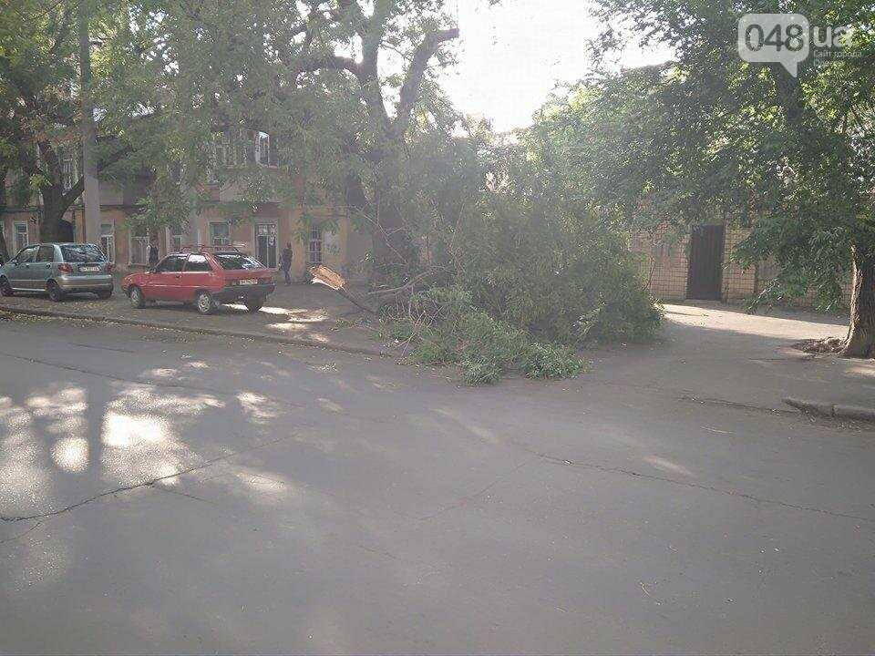 В центре Одессы ветер обломал дерево (ФОТО), фото-1