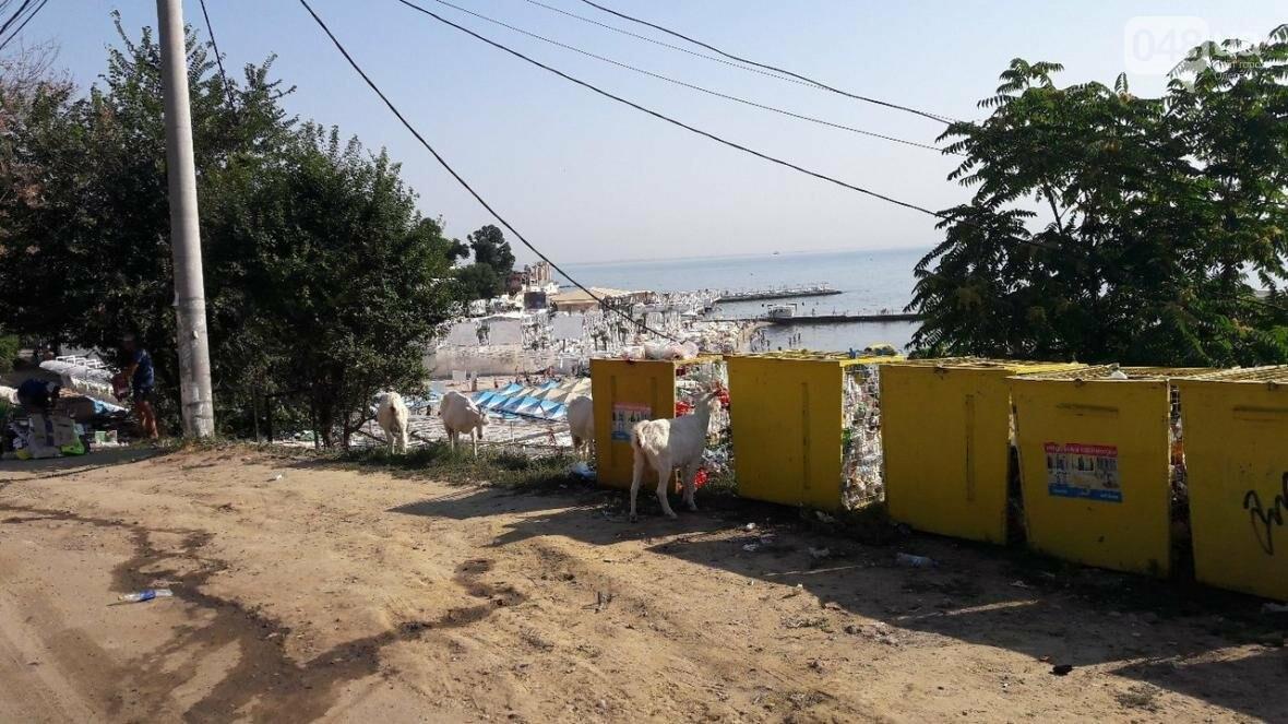 В одесской Аркадии туристов вытесняют ...козы (ФОТОФАКТ), фото-1