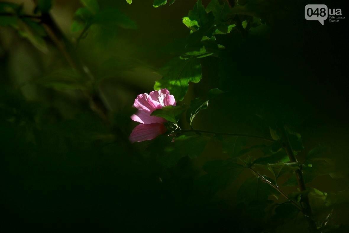 Потрясающая красота! Как Одесса прощается с летом (ФОТОРЕПОРТАЖ), фото-5