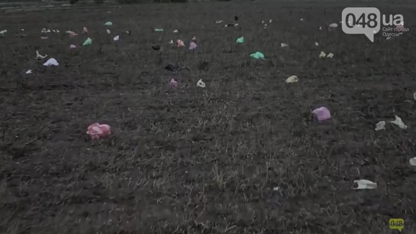 На окраине Одессы ветер несет со свалки мусор и пакеты, фото-1