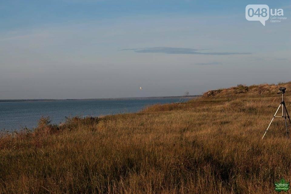 """На рейдах против браконьеров в Одесской области экологов """"страхуют"""" общественники (ФОТО), фото-5"""