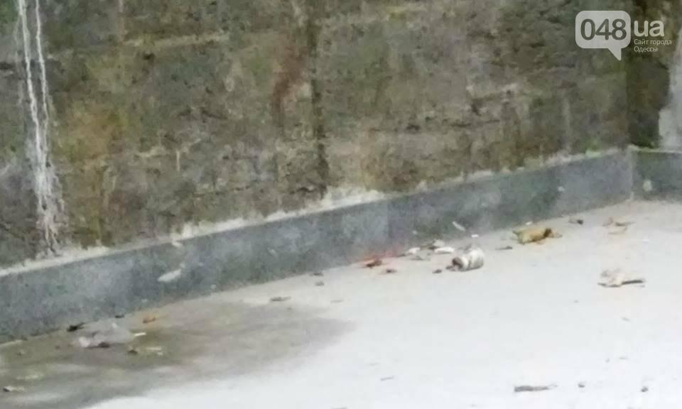 Одессит сфотографировал, как рушится Потемкинская лестница после дождя (ФОТО), фото-5