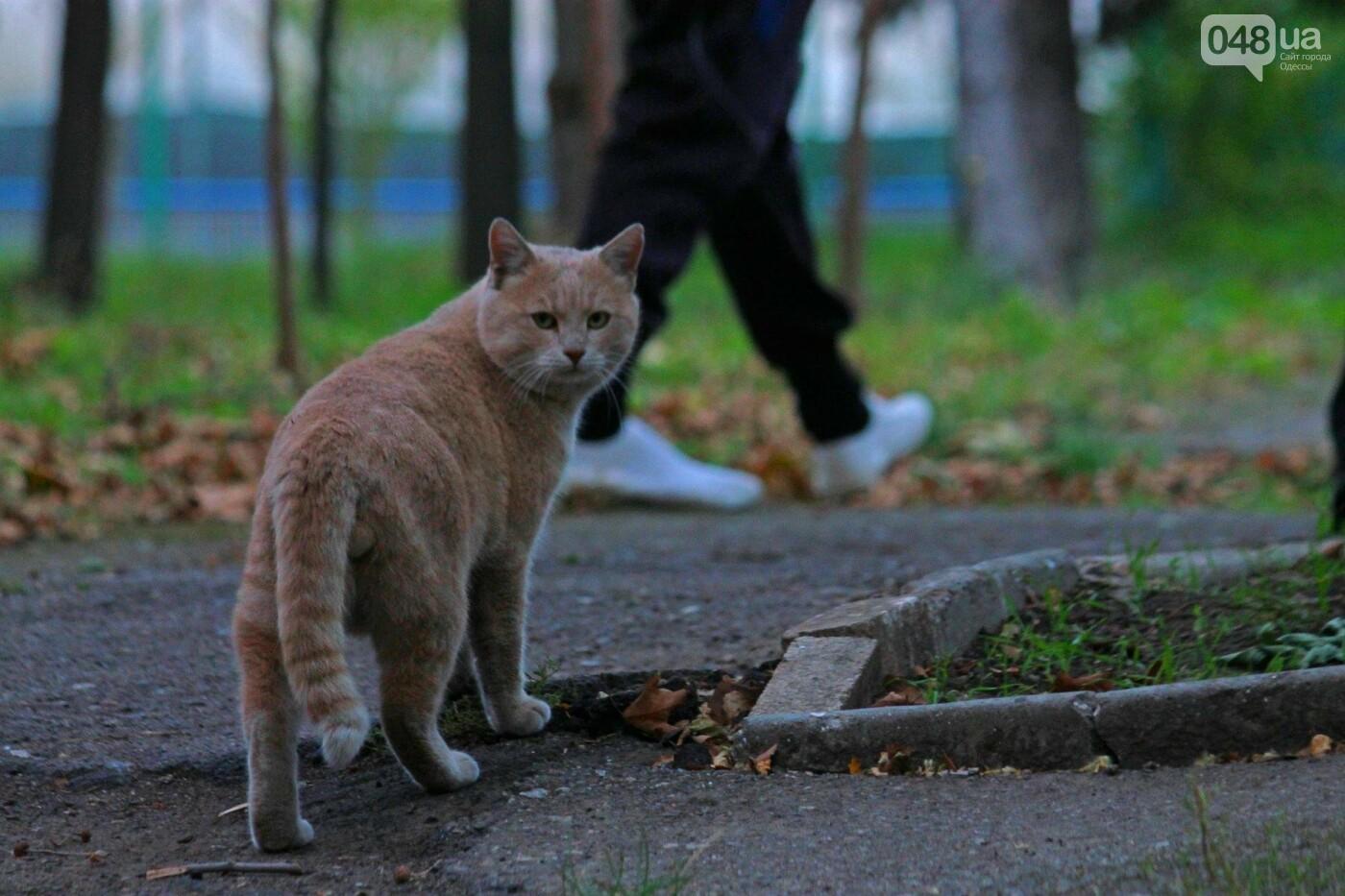 Одесса, которую мы теряем: санаторий им. Чкалова (ФОТОРЕПОРТАЖ), фото-23