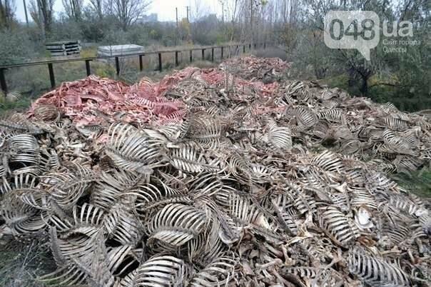 Окровавленные скелеты нашли на окраине Одессы (ФОТО) , фото-2