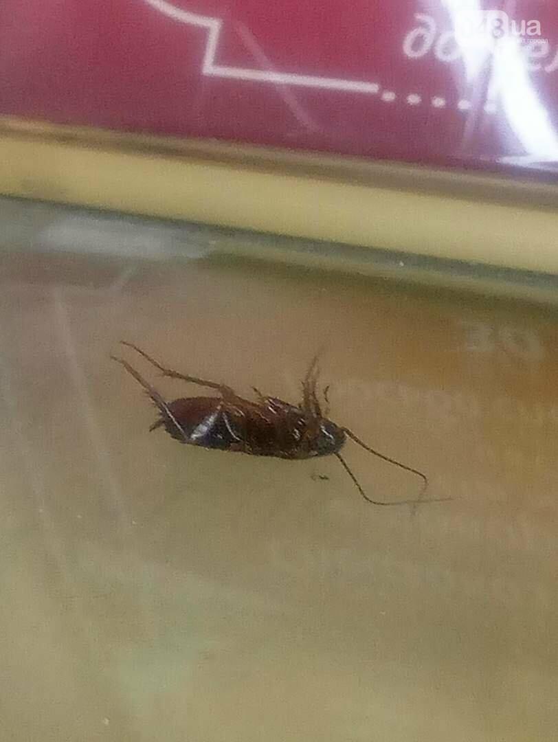 В витрине одесского супермаркета погибает таракан (ФОТО), фото-2