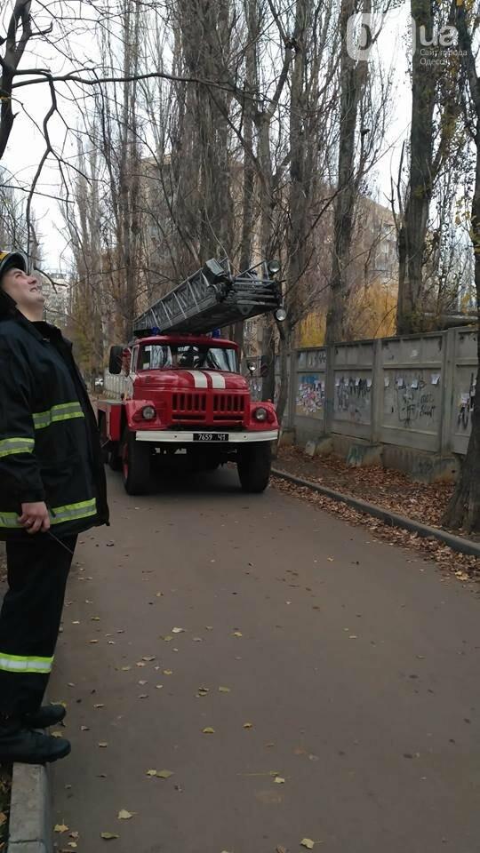 В Одессе кот упал с высоты 8-го этажа и выжил (ВИДЕО), фото-1