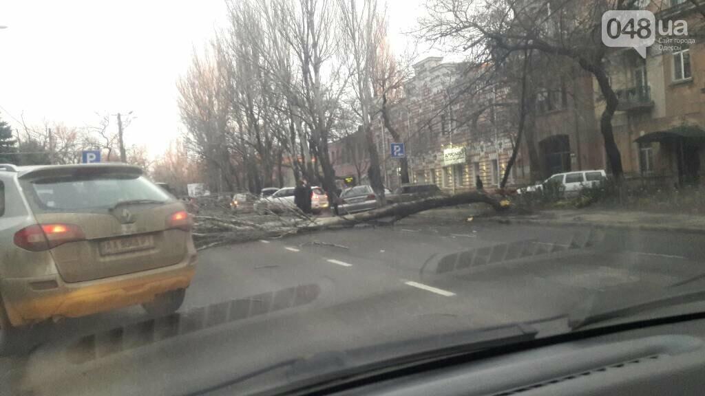 Одесскую Пересыпь заблокировал огромный упавший тополь (ФОТО), фото-2
