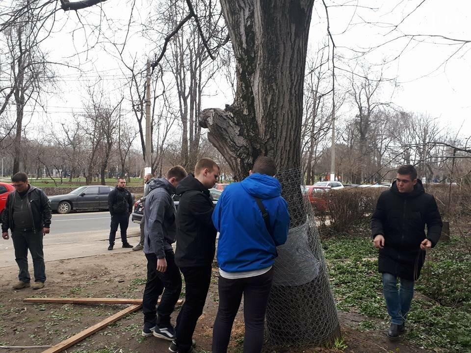 Активисты нашли интересный способ защитить одесские деревья от незаконной вырубки (ФОТО), фото-9