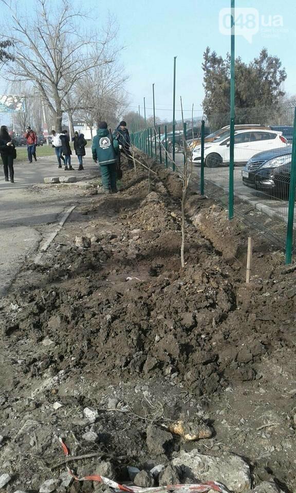 Вокруг скандальной одесской парковки высадили сакуры и сирень (ФОТО) , фото-4