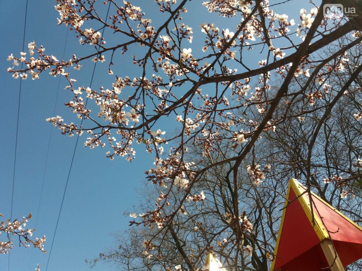 На Одессу обрушилась весна (ФОТОФАКТ), фото-4