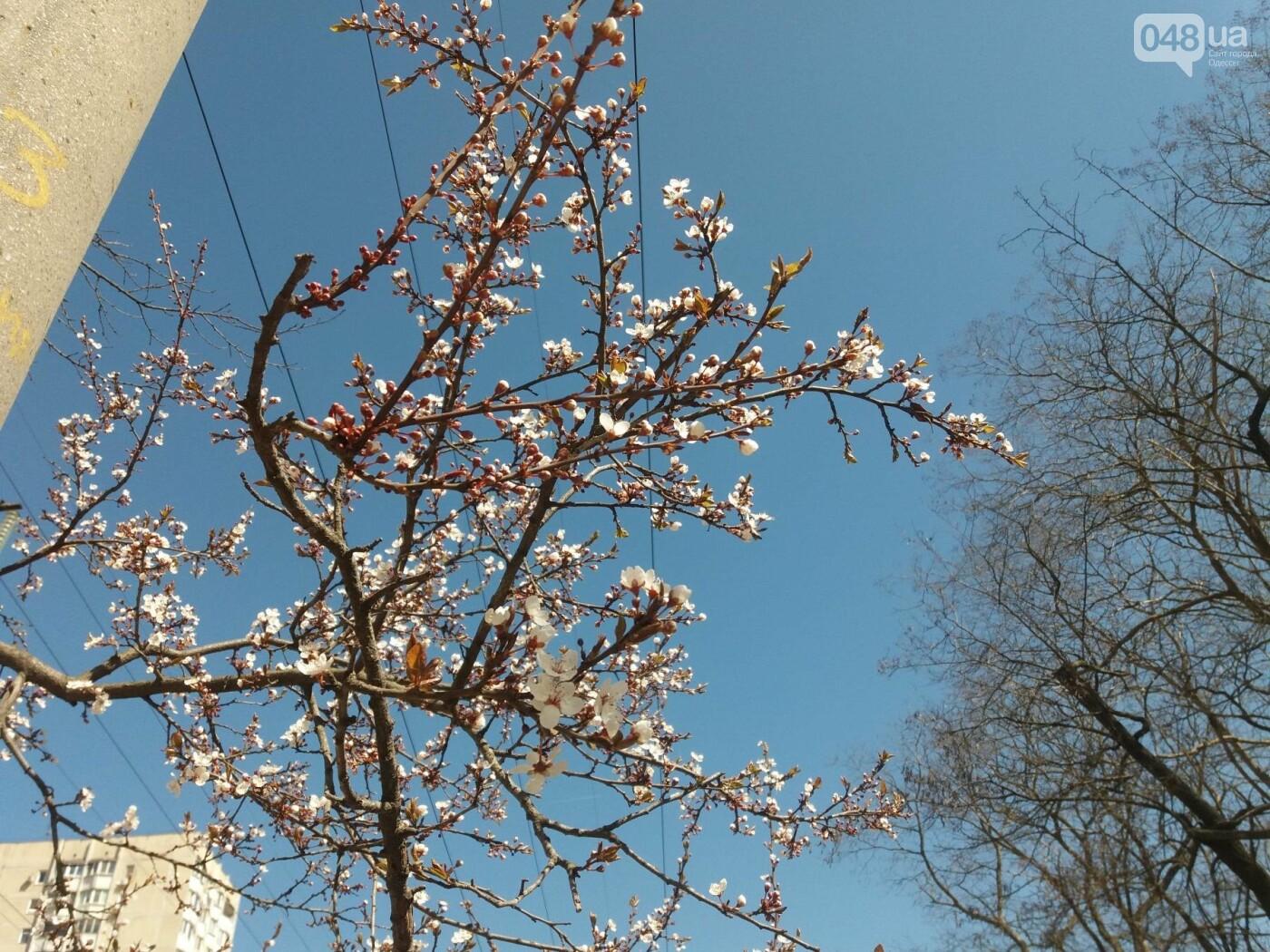 На Одессу обрушилась весна (ФОТОФАКТ), фото-3