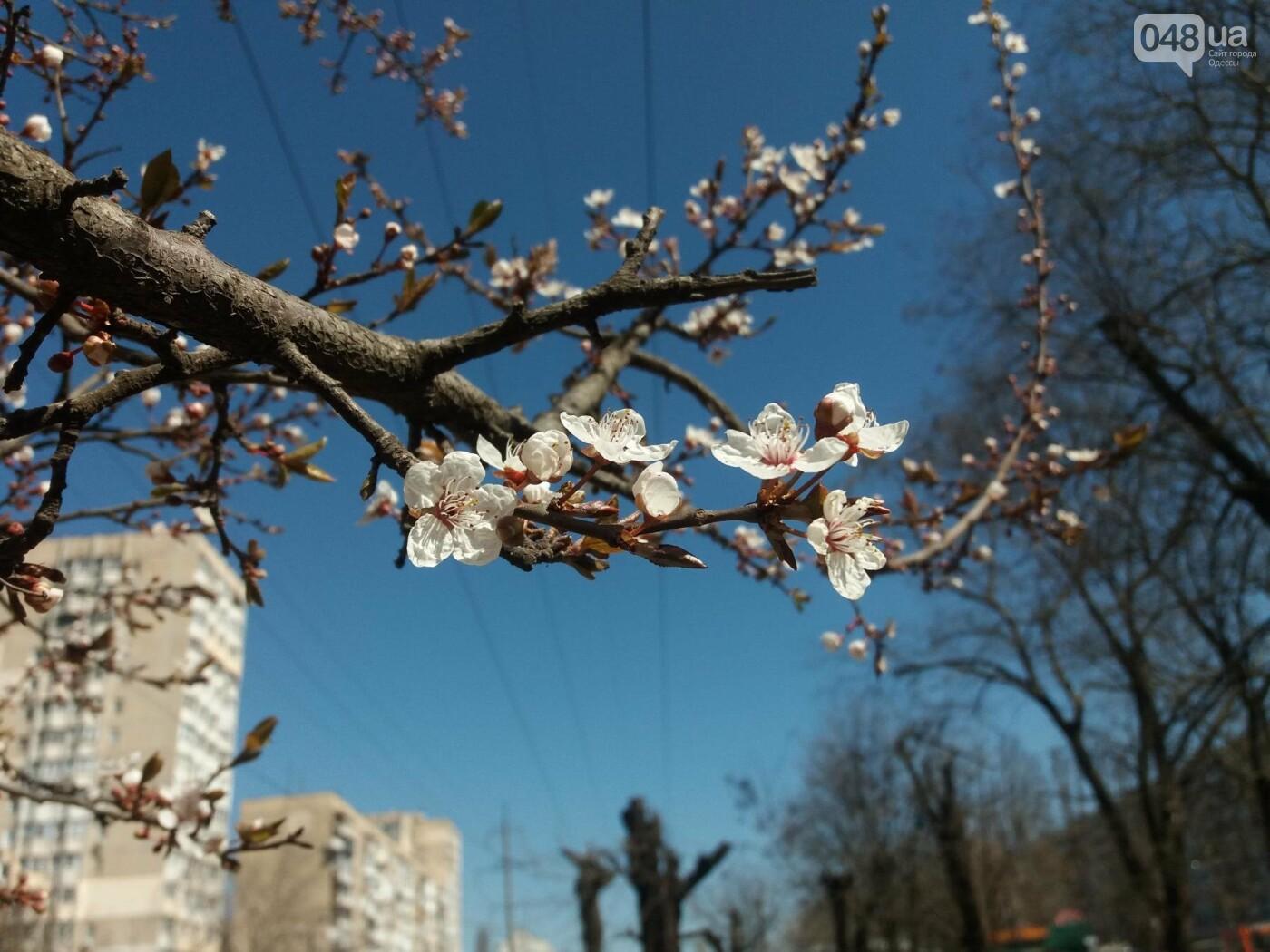 На Одессу обрушилась весна (ФОТОФАКТ), фото-1