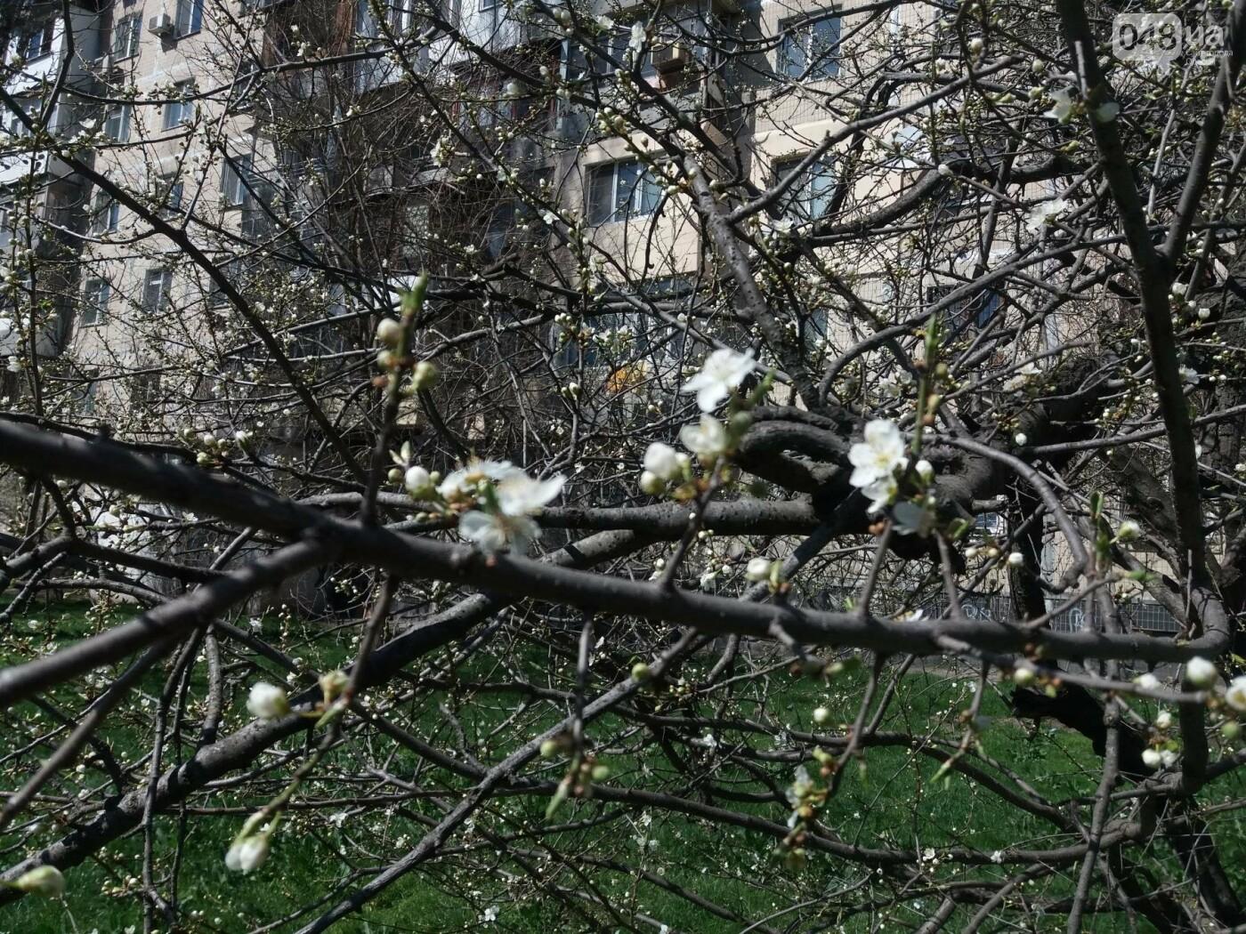На Одессу обрушилась весна (ФОТОФАКТ), фото-6