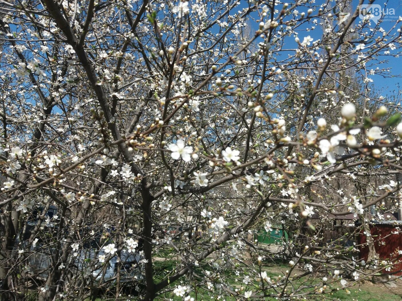 На Одессу обрушилась весна (ФОТОФАКТ), фото-10