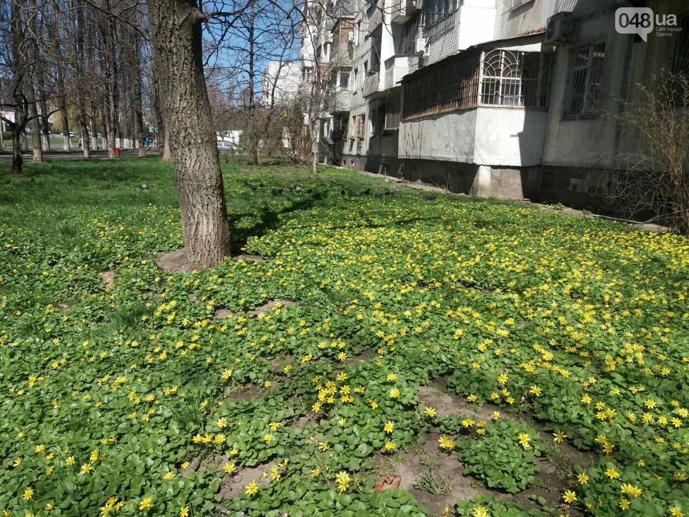 На Одессу обрушилась весна (ФОТОФАКТ), фото-12