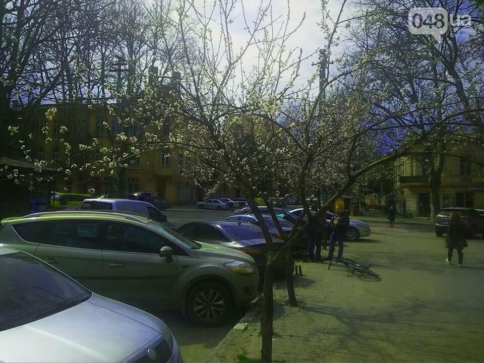 Цветущие абрикосы дышат весной в центре Одессы (ФОТО), фото-7