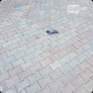 На одесской Соборке неизвестный перестрелял стаю голубей (ФОТО), фото-2