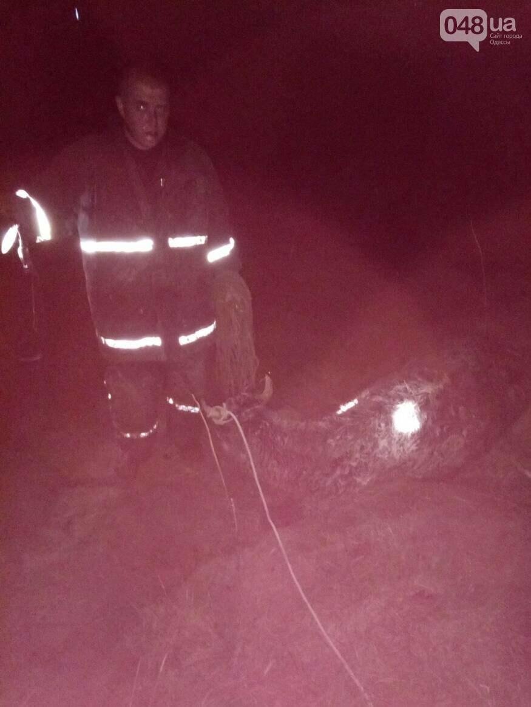 Ох, нелегкая это работа: Из ямы с болотом под Одессой вытянули корову (ФОТО), фото-1