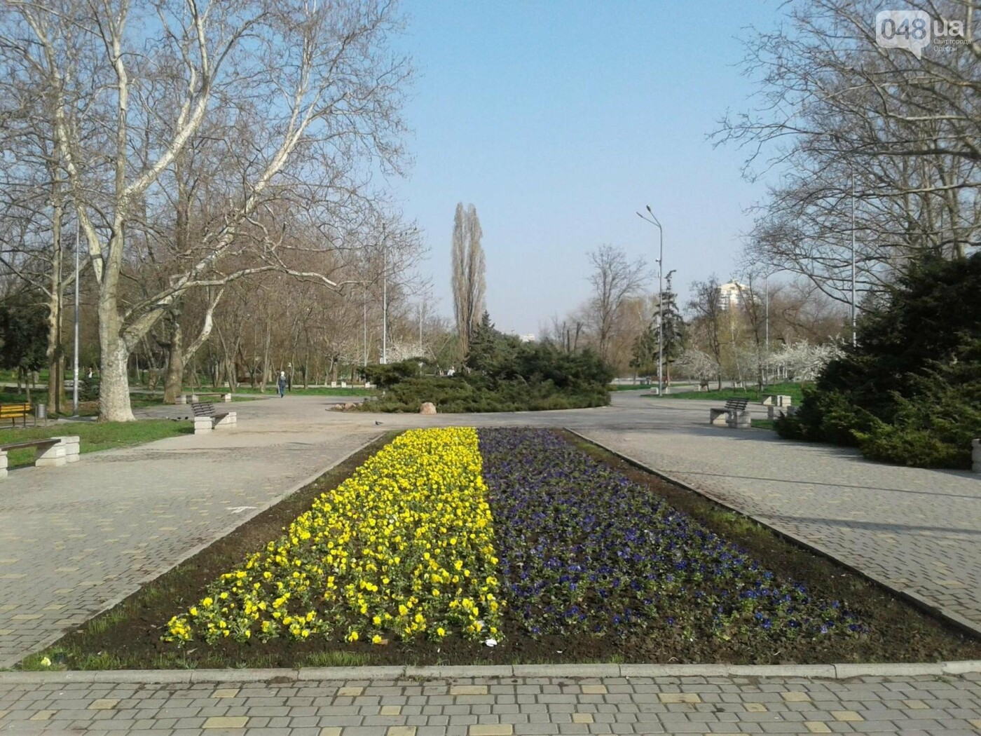 В Одессе появился живой флаг из цветов (ФОТО), фото-1
