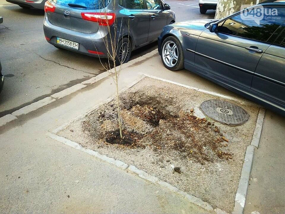 Неизвестные экоактивисты в центре Одессы разбили асфальт и посадили деревья (ФОТО), фото-2