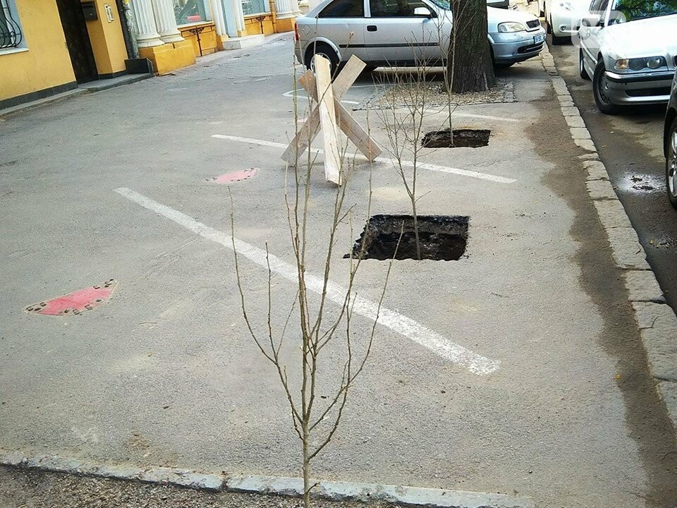 Неизвестные экоактивисты в центре Одессы разбили асфальт и посадили деревья (ФОТО), фото-1
