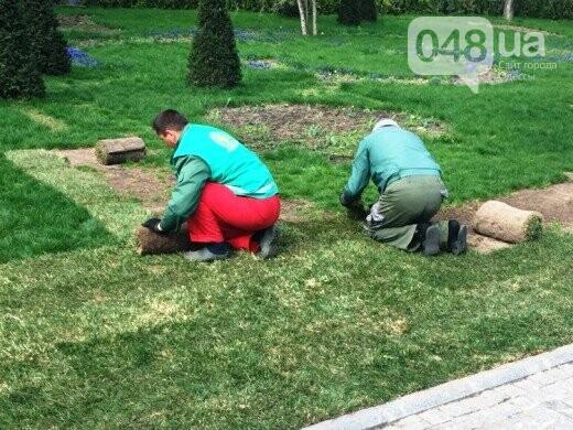 В Стамбульском парке Одессы уложили новый газон (ФОТО), фото-4