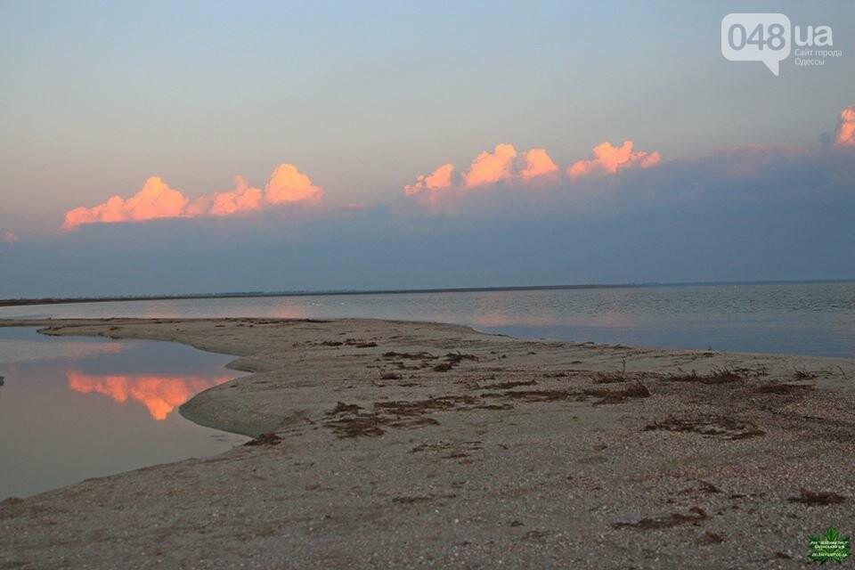 Одесский эколог опубликовал волшебные фото из заповедника: красота просто невероятная (ФОТО) , фото-1