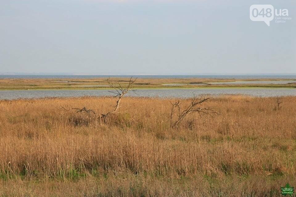 Одесский эколог опубликовал волшебные фото из заповедника: красота просто невероятная (ФОТО) , фото-26