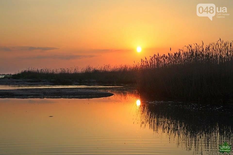 Одесский эколог опубликовал волшебные фото из заповедника: красота просто невероятная (ФОТО) , фото-5