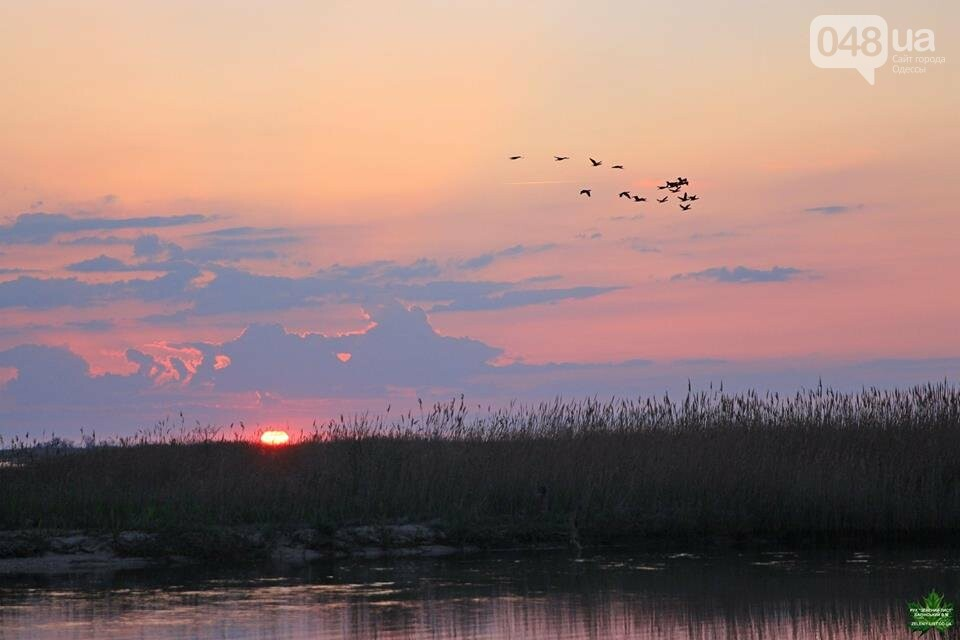 Одесский эколог опубликовал волшебные фото из заповедника: красота просто невероятная (ФОТО) , фото-3