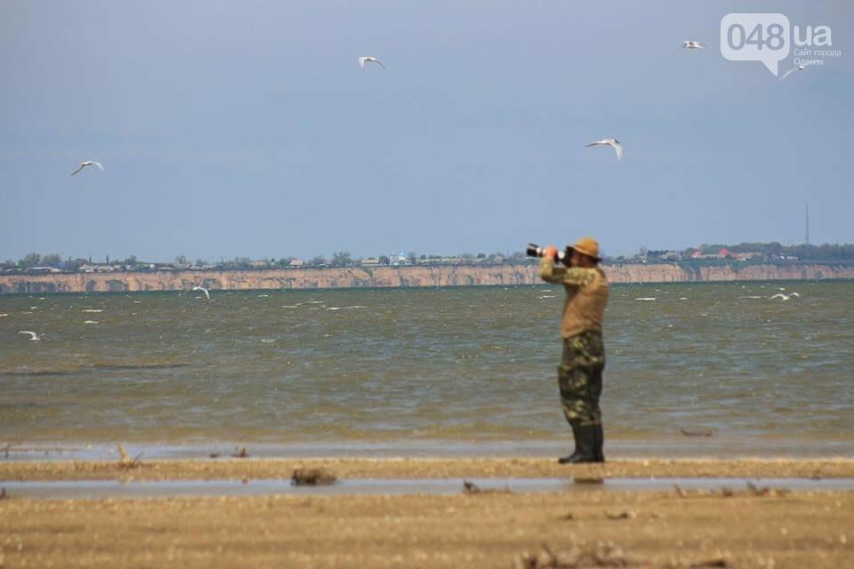 Одесский эколог опубликовал волшебные фото из заповедника: красота просто невероятная (ФОТО) , фото-4