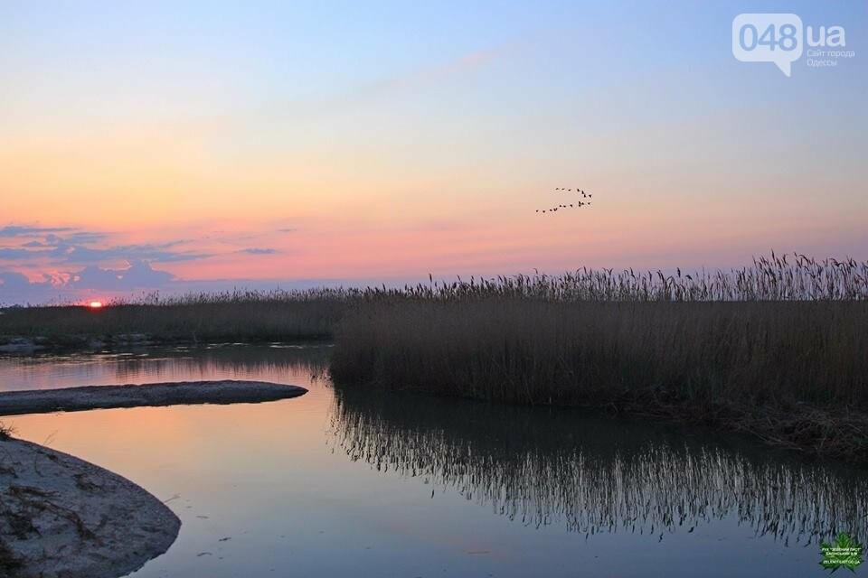 Одесский эколог опубликовал волшебные фото из заповедника: красота просто невероятная (ФОТО) , фото-7