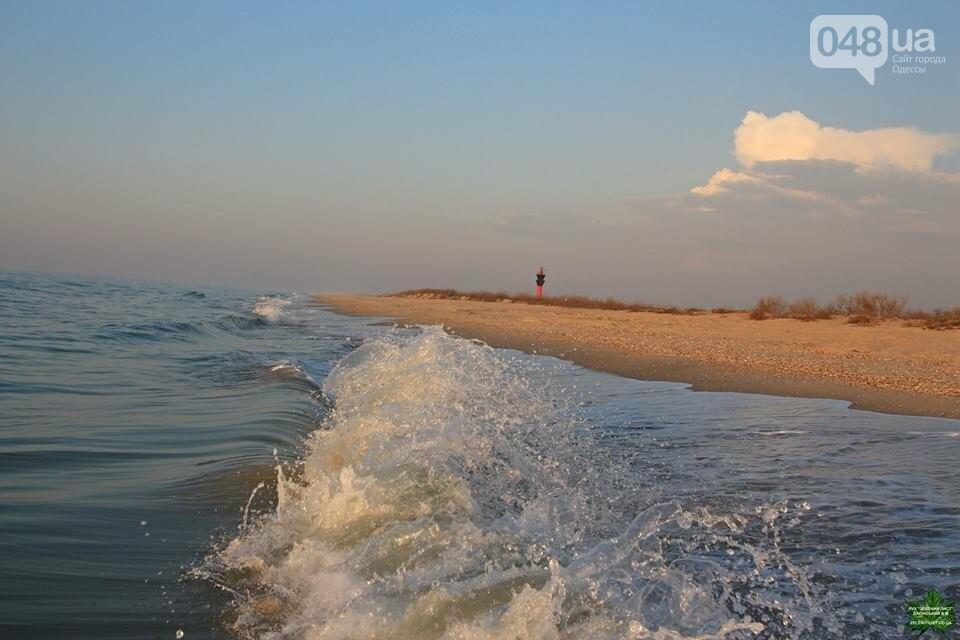 Одесский эколог опубликовал волшебные фото из заповедника: красота просто невероятная (ФОТО) , фото-18