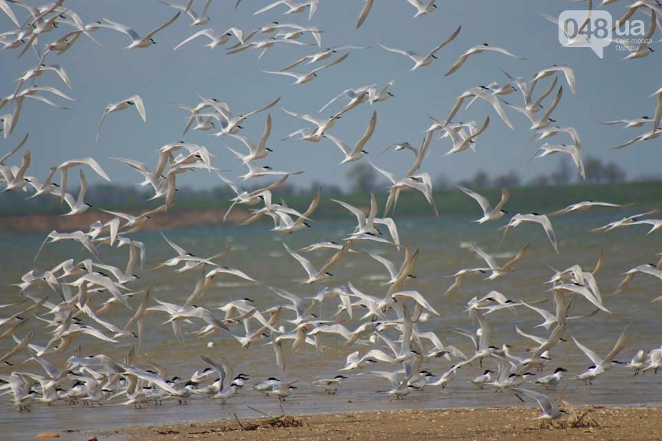 Одесский эколог опубликовал волшебные фото из заповедника: красота просто невероятная (ФОТО) , фото-40