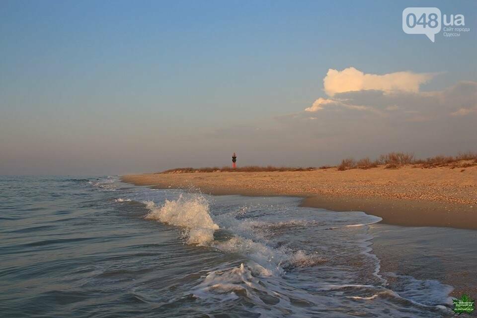 Одесский эколог опубликовал волшебные фото из заповедника: красота просто невероятная (ФОТО) , фото-8