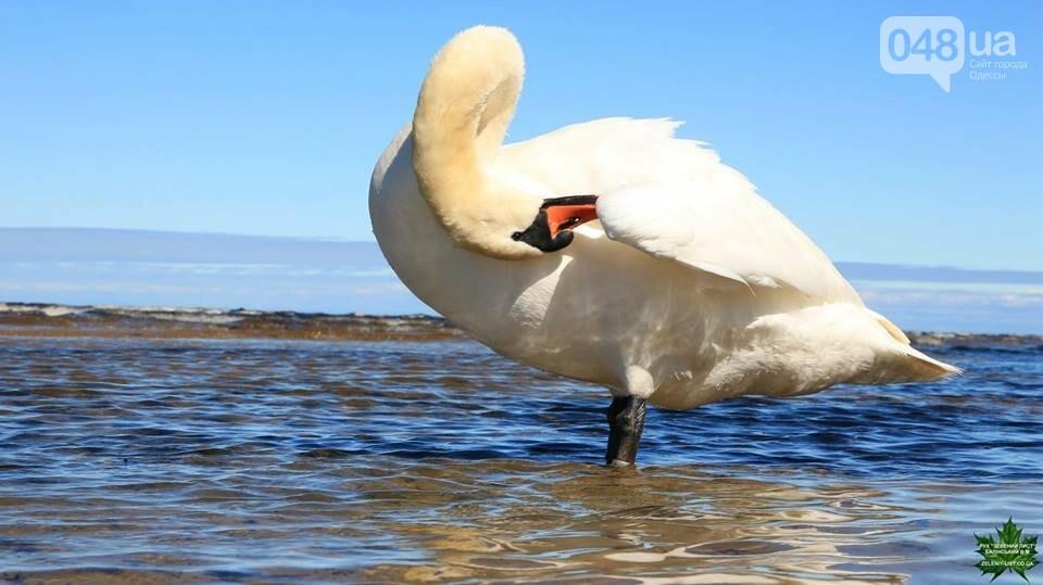 Одесский эколог опубликовал волшебные фото из заповедника: красота просто невероятная (ФОТО) , фото-34
