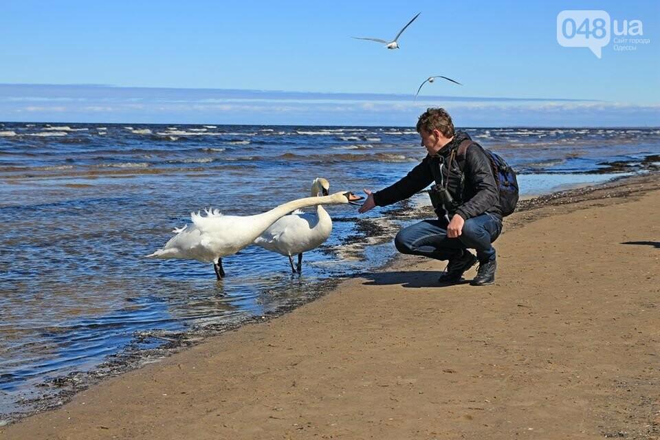 Одесский эколог опубликовал волшебные фото из заповедника: красота просто невероятная (ФОТО) , фото-41