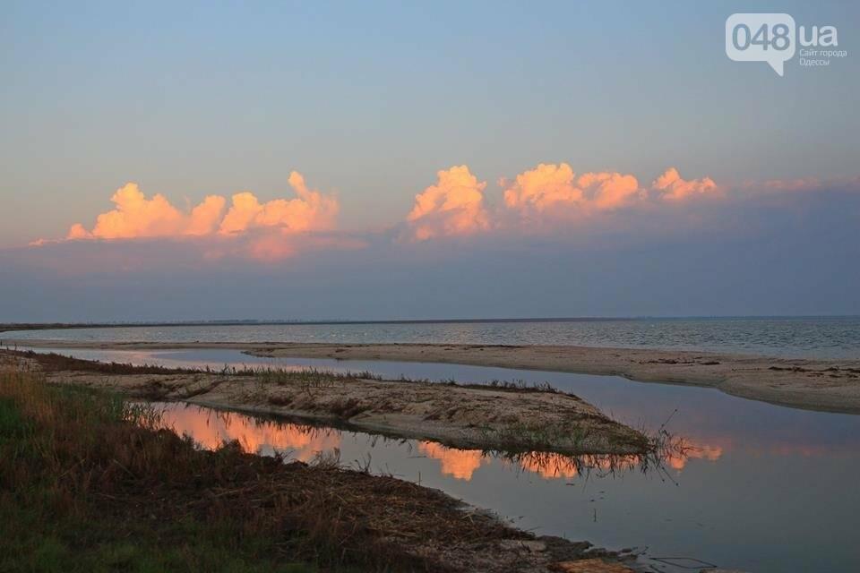 Одесский эколог опубликовал волшебные фото из заповедника: красота просто невероятная (ФОТО) , фото-10