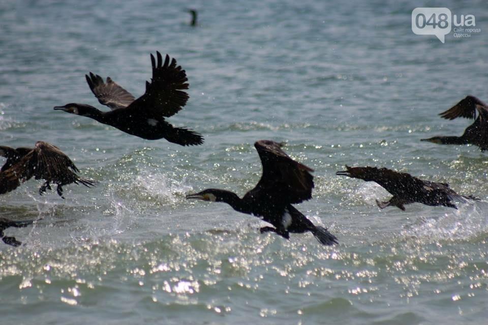 Одесский эколог опубликовал волшебные фото из заповедника: красота просто невероятная (ФОТО) , фото-36