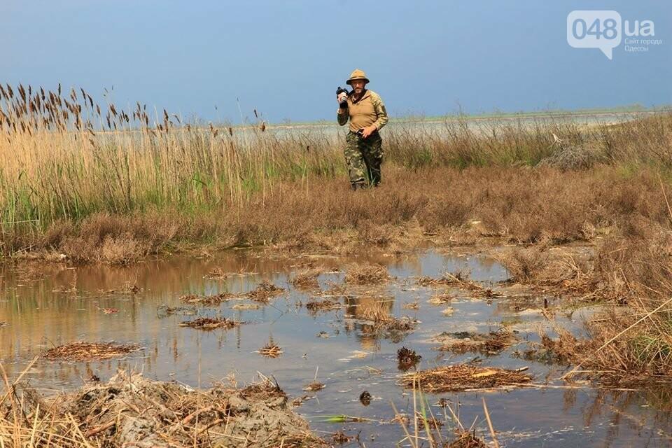 Одесский эколог опубликовал волшебные фото из заповедника: красота просто невероятная (ФОТО) , фото-31